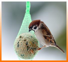Blocs et boules de graisse pour les oiseaux de la nature