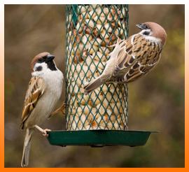 Distributeurs de graines et mangeoires pour oiseaux de la nature