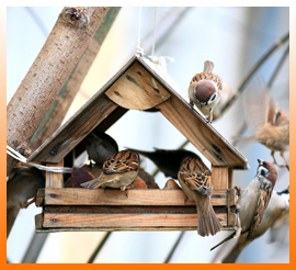 Nichoirs pour oiseaux de la nature
