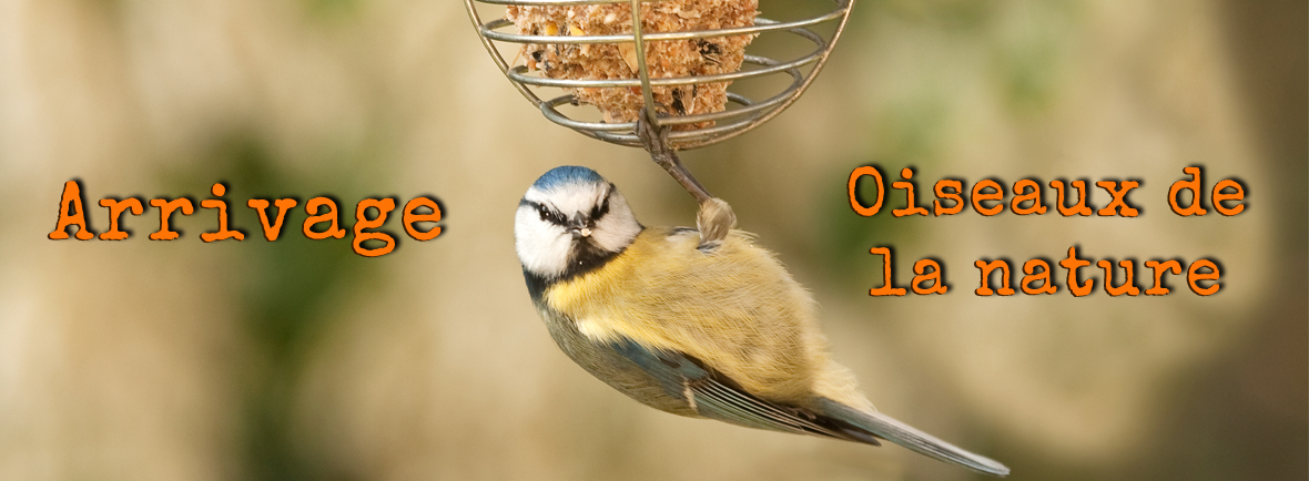alimentation et accessoires pour oiseaux de la nature