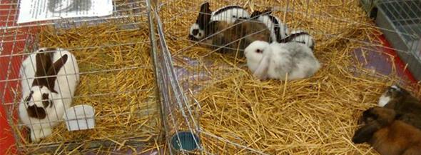 vente lapins