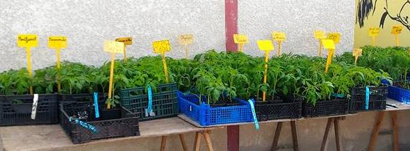 vente plants potagers la halle aux grains