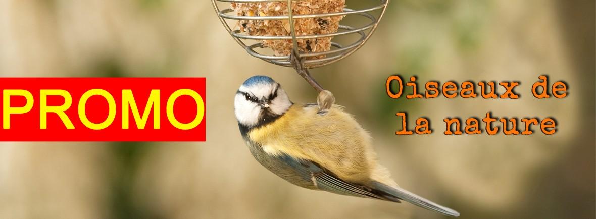 20% de réduction immédiate sur les distributeurs, mangeoires et nichoirs pour les oiseaux de la nature
